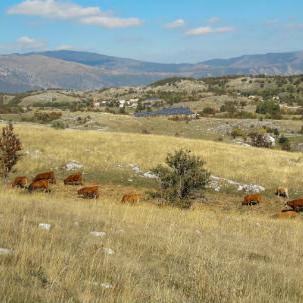 HEET u Prozor-Rami gradi vjetroelektrane i pokreće proizvodnju zdrave hrane