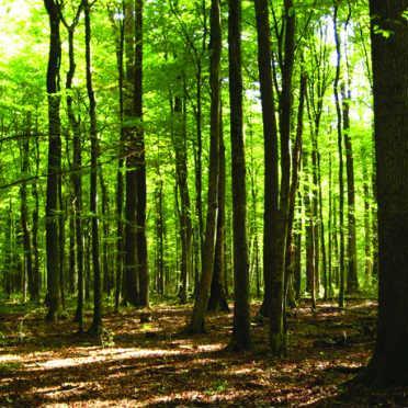 Procjena je da trenutno 46 posto stambenih objekata koristi drvo kao energent za grijanje.