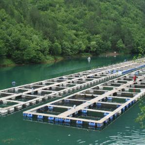 Predstavnici Konzuma još jednom su iskazali čvrsto opredjeljenje za pomoć i razvoj domaće privrede. Firma od jednog malog ribnjaka za kratko vrijeme izrasla u respektabilnog proizvođača koji ima izuzetno kvalitetnu ribu.