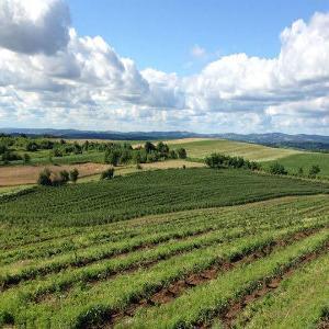 Podrška gradske uprave Bihaća poljoprivrednicima u protekle tri godine rezultirala je razvojem poljoprivredne proizvodnje.