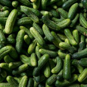 Upotreba agrila u proizvodnji nova je tehnika kojom se postižu bolji efekti kod uzgoja kornišona. Folija koja se postavlja u ranoj fazi doprinosi bržem rastu, čime se skraćuje i vrijeme do berbe.