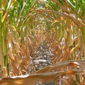 Štete na poljoprivrednim usjevima u Republici Srpskoj premašile su 85 miliona evra. Kukuruz, voće i povrće gotovo su uništili grad i visoke temperature.
