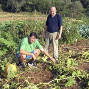 Husein Selimović potvrdio je da životinje pustoše prinose kukuruza, iako se njegovi plodovi još nisu odmetnuli, te površine zasađene lubenicama i dinjama.