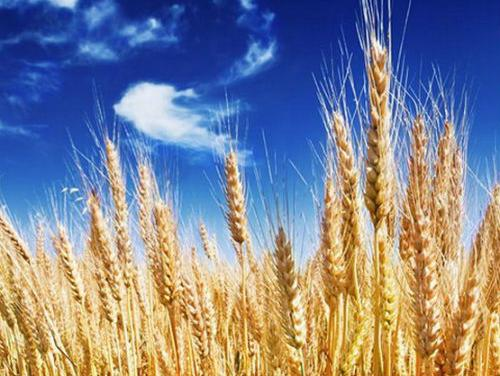 Šest garantno - kreditnih linija za Start Up iz oblasti poljoprivrede