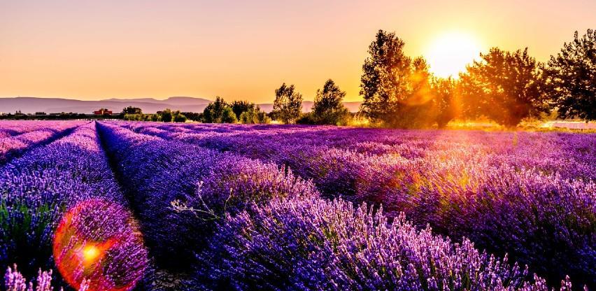 Bajkovita i mirisna polja lavande u regiji