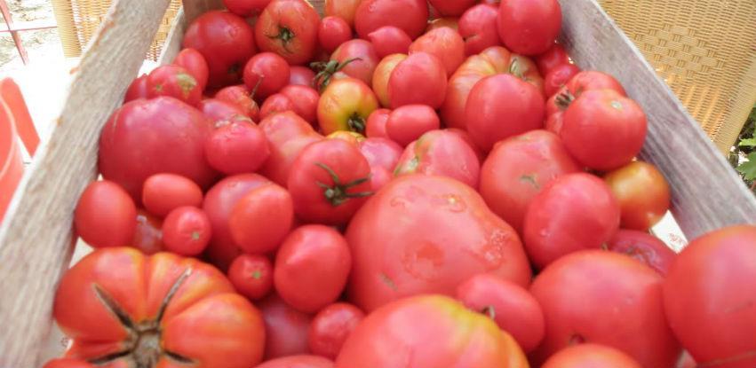 Nema informacija da je sporni paradajz iz Turske uvezen uBiH