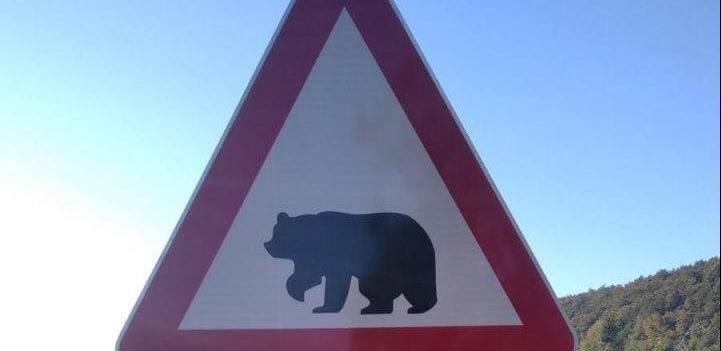 Postavljen prvi saobraćajni znak sa siluetom mrkog medvjeda u BiH