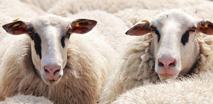 Poljoprivrednici traže hitnu nabavku vakcina i markica za obilježavanje stoke