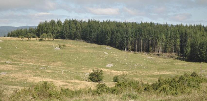 Sredstvima od prodaje šume opština Sokolac sufinansira sedam projekata
