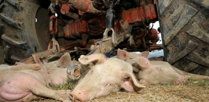 Balkanske zemlje u borbi protiv širenja afričke svinjske kuge