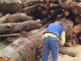 Sve veća potražnja za ugljem i drvima