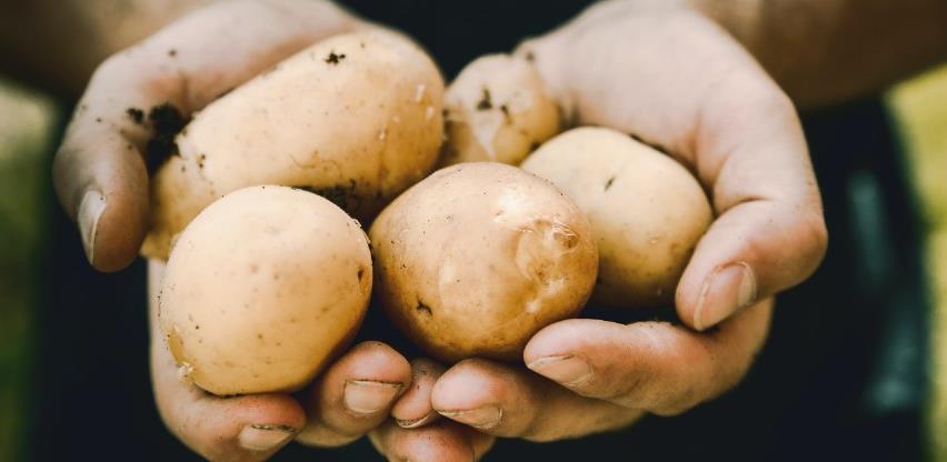 Vlada KS usvojila Inicijativu o iznalaženju sredstava za otkup trzišnih viškova krompira i luka