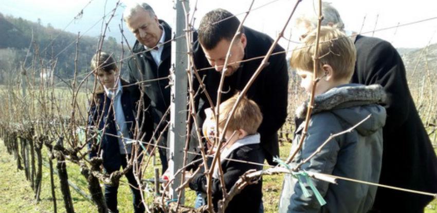 """U vinogradima """"Vukoje"""" završena ovogodišnja rezidba prvih čokota"""