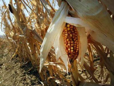 Orašje: Suša prepolovila prinose poljoprivrednih kultura