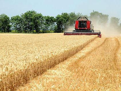 Proizvođači prijete da će svu pšenicu izvesti u Tursku