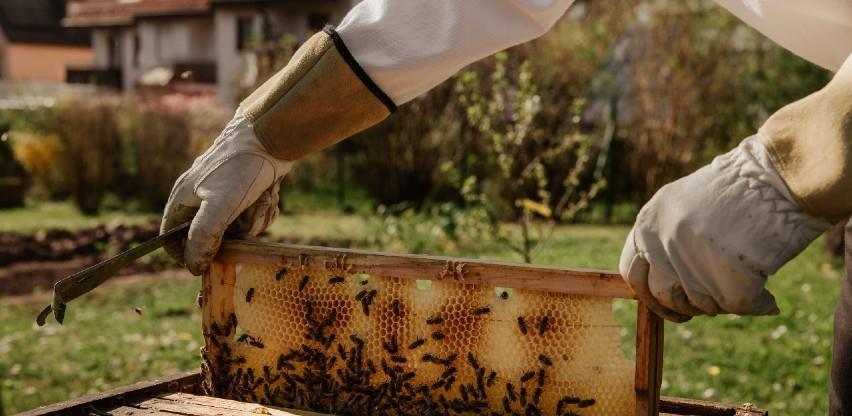 Pčelari u USK dižu kredite kako bi spasili pčelinjake