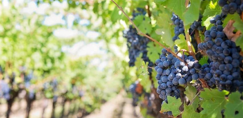Predloženo uputstvo o uvozu grožđa radi zaštite domaće proizvodnje