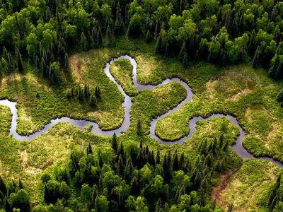 Izumiranje prijeti polovici svih vrsta drveća u Amazoni