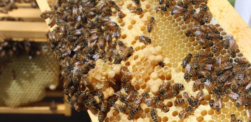 Područje Srebrenice idealno za pčelarstvo, ove godine bolji prinosi meda