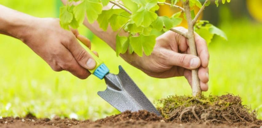 Sadnja velikih šuma za spas klime može i štetiti