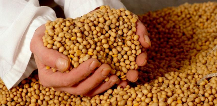 Egić: Vidljivi pomaci u proizvodnji soje
