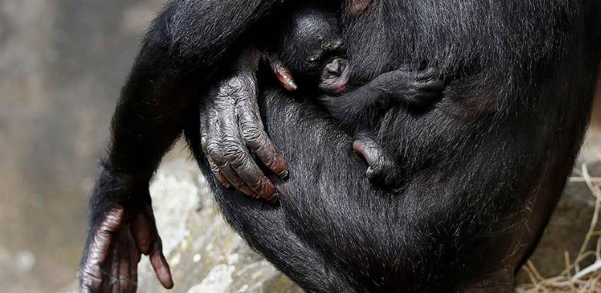 Karantena izazvala baby boom u sibirskom zoološkom vrtu