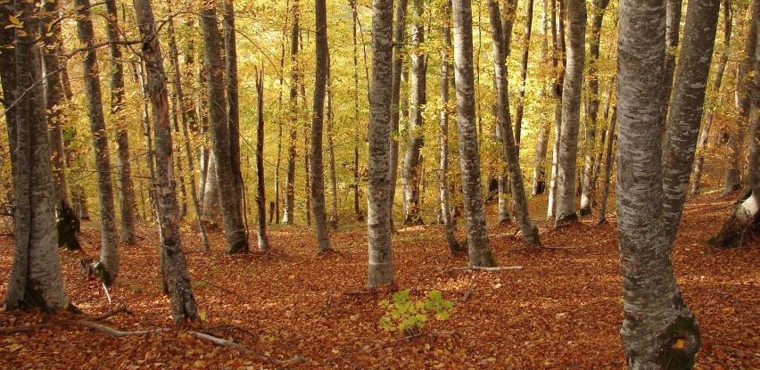 Usvojen Zakon o šumama KS: Smanjenje parafiskalnih nameta dugoočekivana olakšica privrednicima