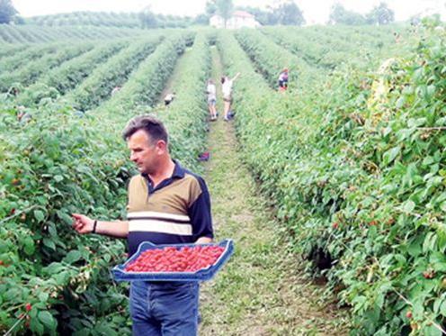 LOK MKF podržava projekte ulaganja u poljoprivredu