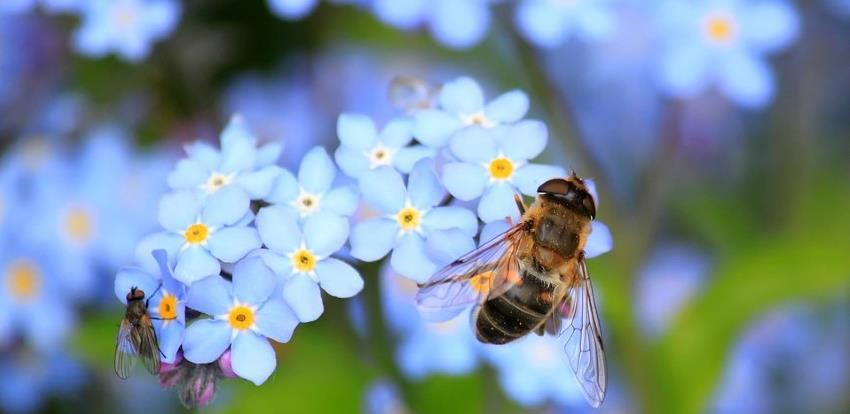 Pčele mjere radioaktivnost na Trgovskoj gori