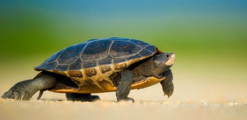 Zatvorena najveća ilegalna farma kornjača u Evropi