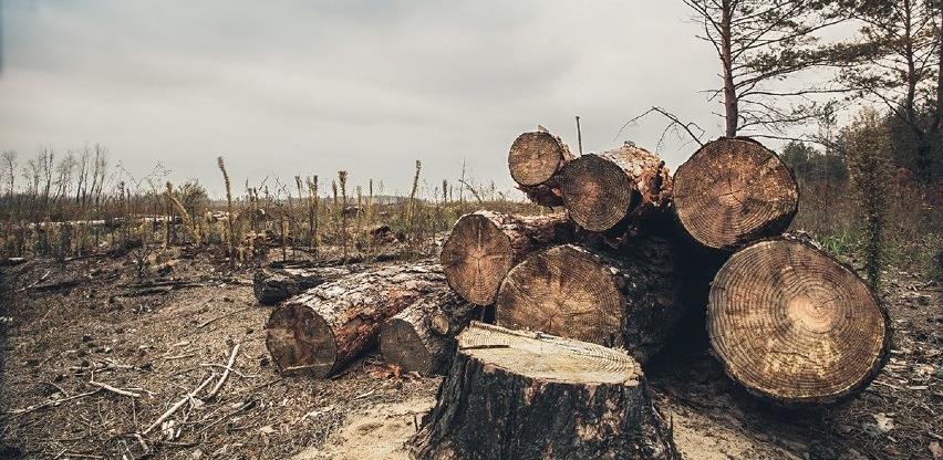 U pustošenje šuma uključeni i oni koji ih trebaju čuvati