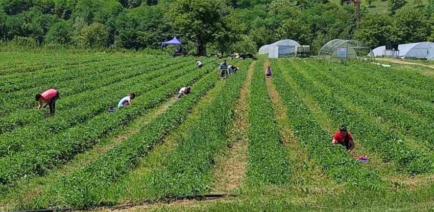 Agroideja iz Ustikoline proizvodi voće, povrće i žitarice