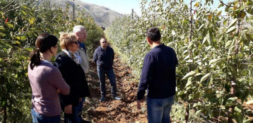 Predstavljena inovativna rješenja u uzgoju trešnje