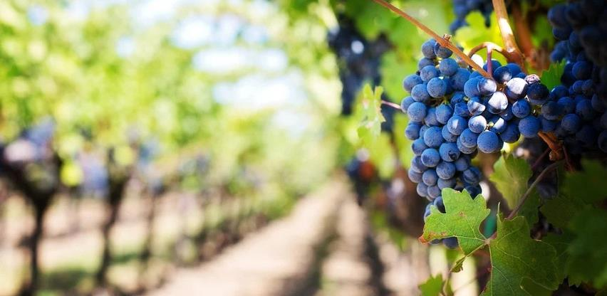 U BiH ipak stiglo uvozno grožđe: Poruka da se ne isplati raditi