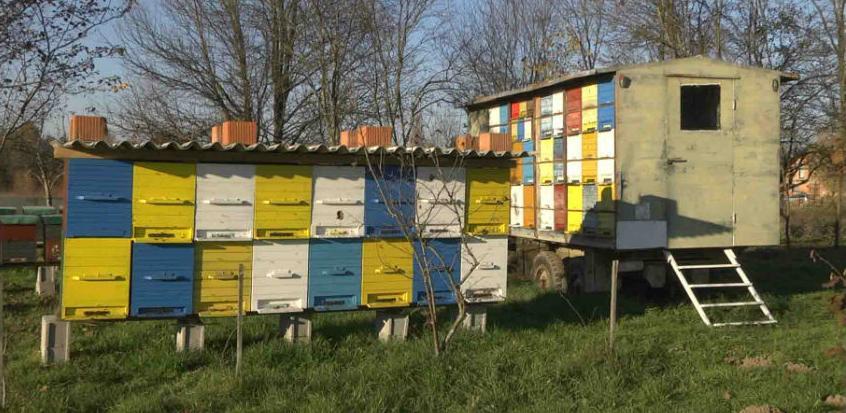 U sektoru pčelarstva u BiH postoji veliki prostor za poboljšanja