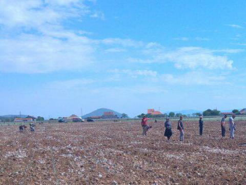 Sadnice smilja iz Gnjilišta izvoze se u zemlje regije