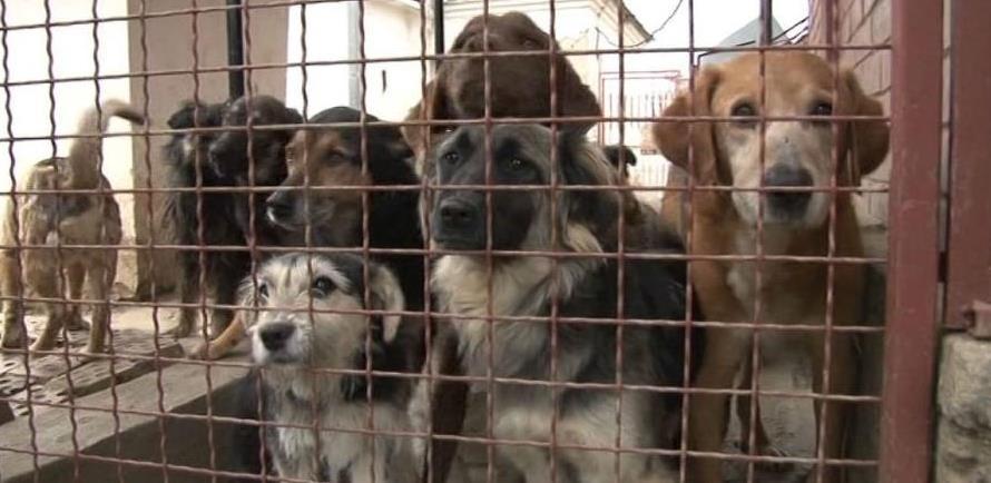 Počela gradnja novog azila za napuštene pse
