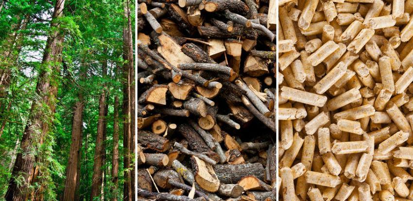 Otvoren javni poziv bh. privatnim preduzećima koja se bave drvnom biomasom