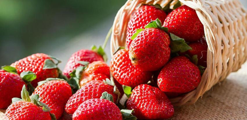 Njemački poljoprivrednici za berbu jagoda nude satnicu 8,8 eura, stan i hranu