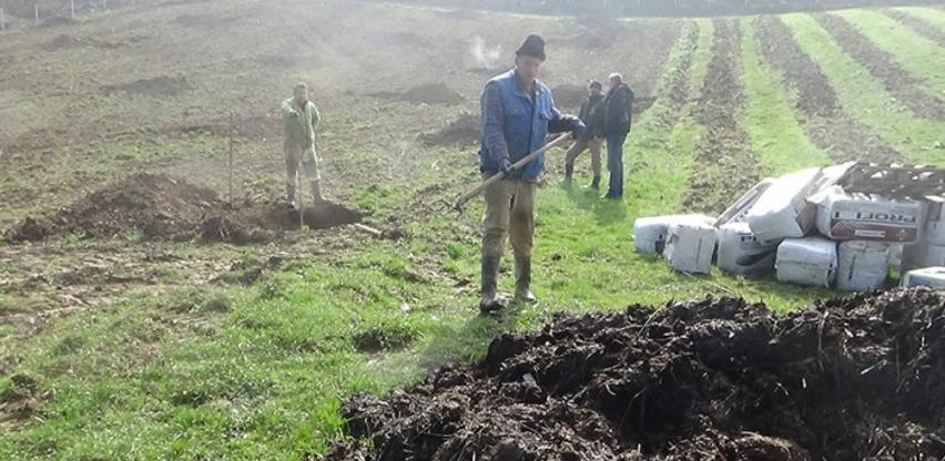 Podignuta plantaža pitomog kestena u Velikoj Kladuši