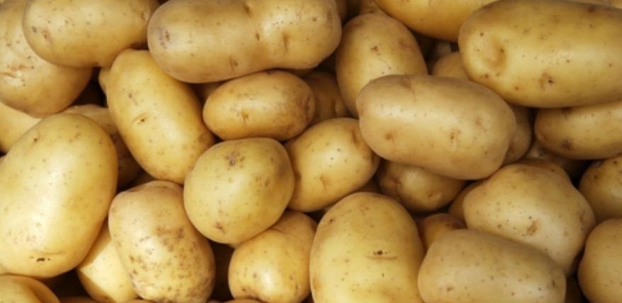 Mraz prepolovio urod mladog krompira