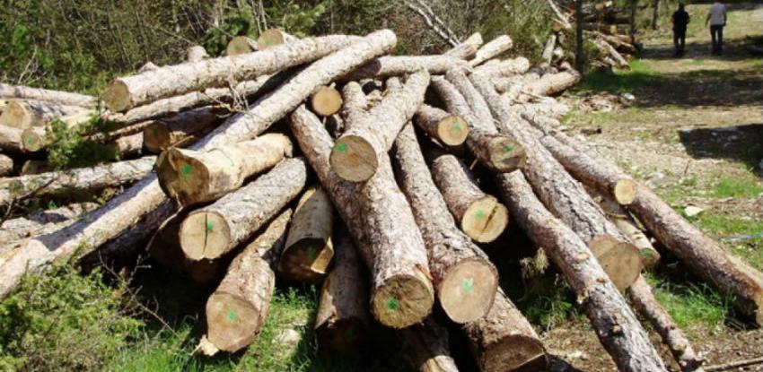 Pokrenuta inicijativa da se iz BiH zabrani izvoz drveta i drvnih prerađevina