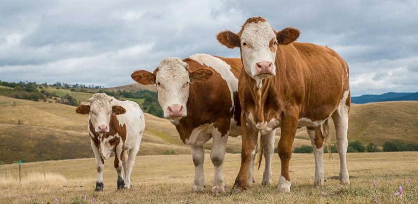 Pravilnik o mjerama za rano otkrivanje paratuberkuloze i virusne dijareje goveda