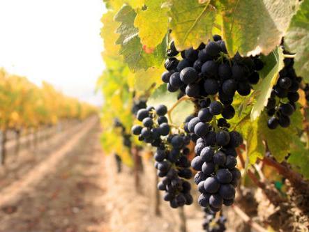 Sjeverni i sjeverozapadni krajevi RS-a potencijal za razvoj vinskog turizma
