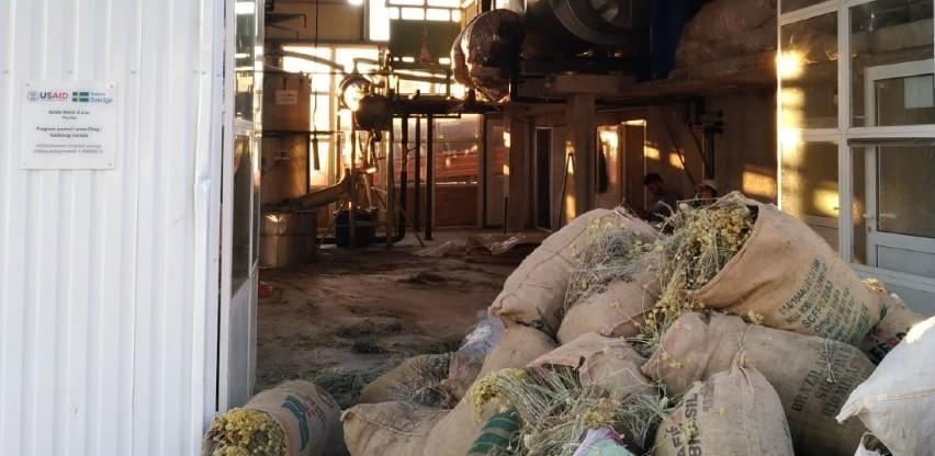 Proizvođači smilja iz Hercegovine pronašli način da opstanu