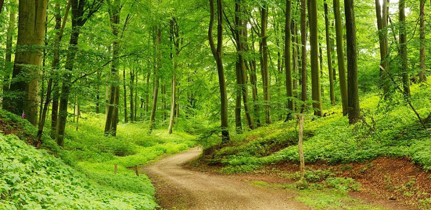 U BiH certificirano više od pola državnih šuma