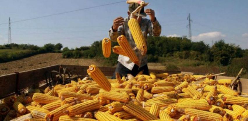 RS: Podrška proizvođačima merkantilnog kukuruza