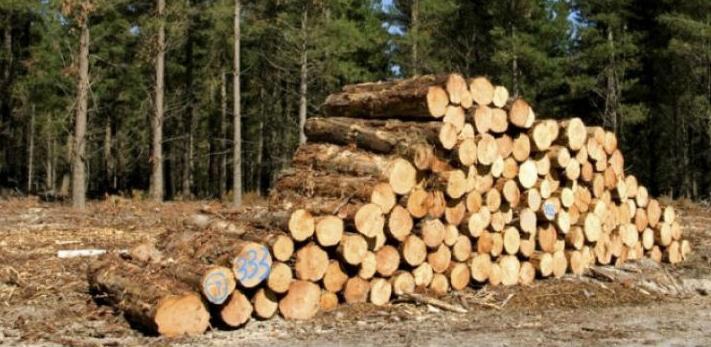 Drvoprerađivači nezadovoljni raspodjelom drvnih sortimenata