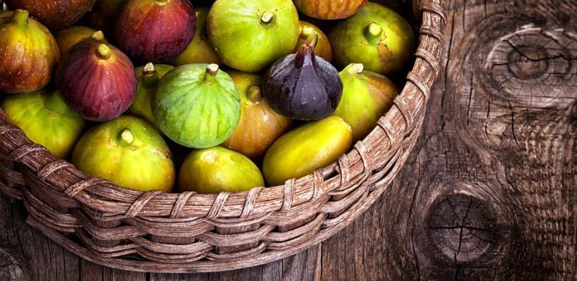Kod Trebinja će biti zasađeno oko dvije hiljade sadnica smokve