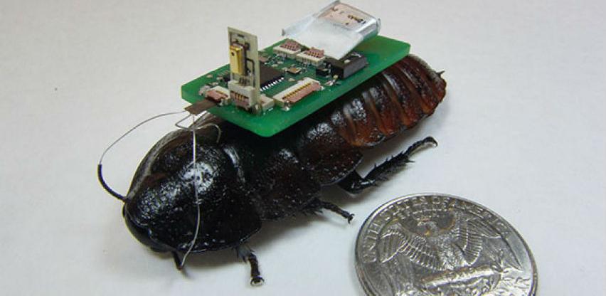 Roboti žohari mogli bi se koristiti u ratnim misijama